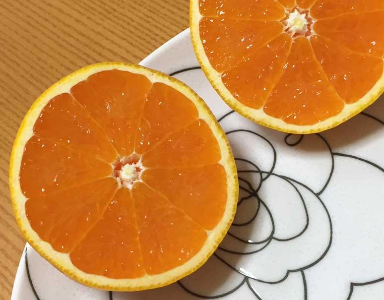 みかん 清美 「清見タンゴール」品種紹介 みかんのことなら「のま果樹園」